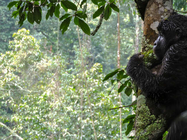 Kenya & Uganda Gorilla Overland: Forests & Wildlife Spotting