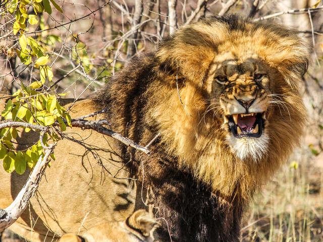 Kruger, Falls & Zimbabwe: Mineral Pools & National Parks