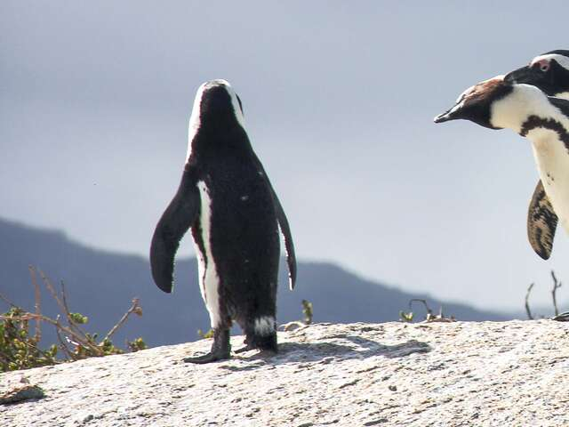 Cape Town Nature And Wildlife Day Tour