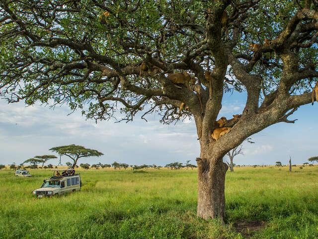 Tanzania Family Journey: A Serengeti Safari