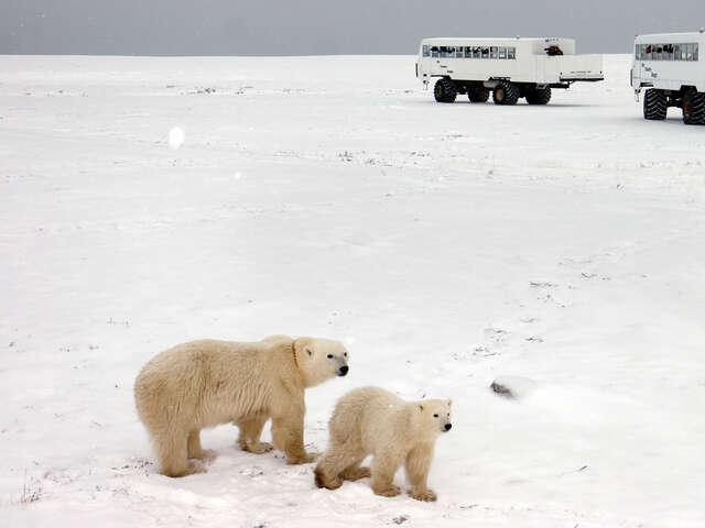 Churchill Polar Bears Independent Adventure