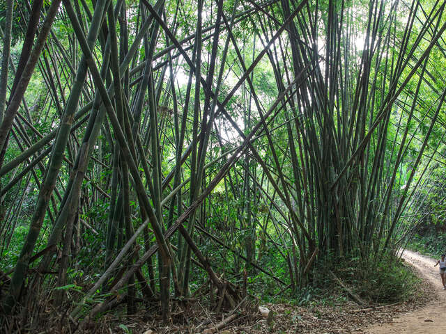 Laos to Northern Thailand: Treks & Trails