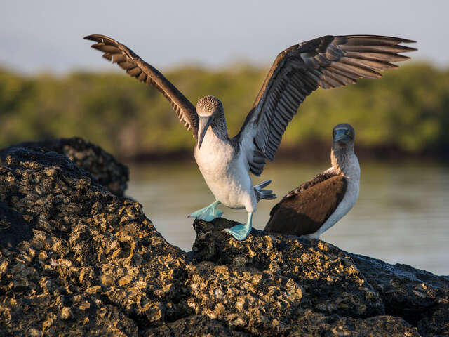 Galápagos Express Adventure: Wilderness & Wildlife