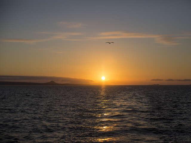 Complete Galápagos - Estrella del Mar
