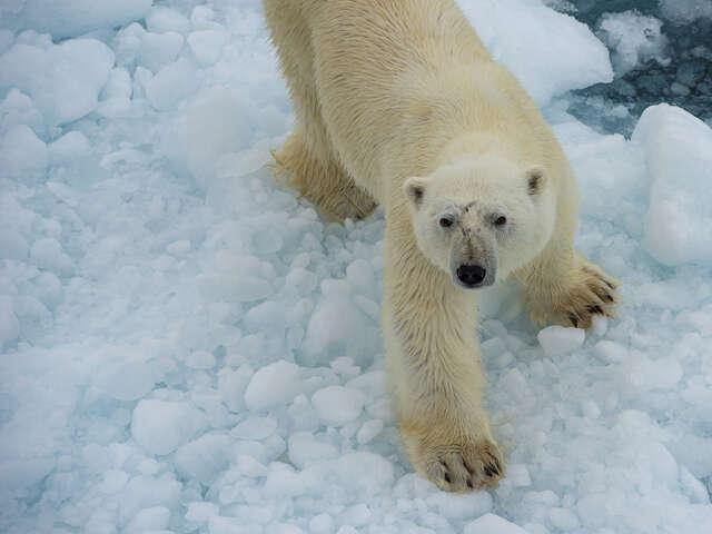 Canadian Polar Bear Experience
