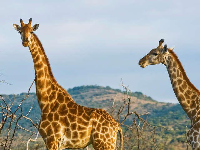 Kenya Overland: Rhinos & National Reserves
